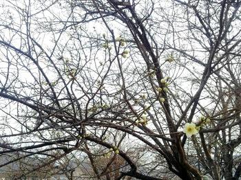 まだ春にはもうすこし.jpg