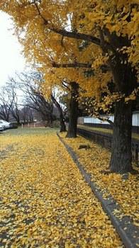黄色の世界~.jpg